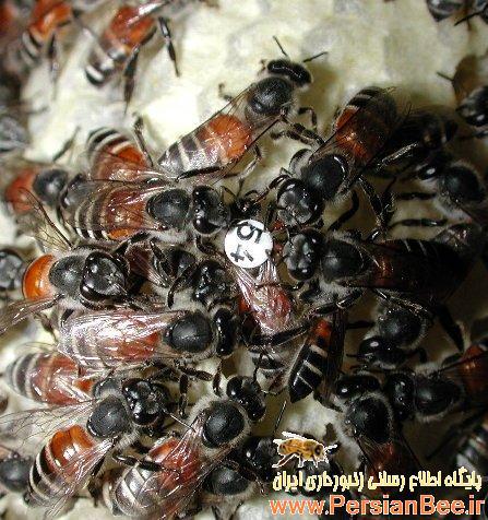 فیلمی از دنیای زیبای زنبورهای عسل