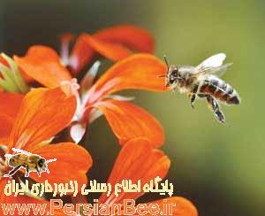 آیا نیش زنبور خطر ناک می باشد یا خیر؟,آیا نیش زنبور خطر ناک می باشد,نیش زنبور خطر ناک می باشد,نیش زنبور خطر ناک,نیش زنبور
