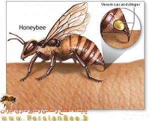 خطرات ناشی از زنبور گزیدگی,عوارض زنبور گزیدگی,مراقبتهای پزشکی در زنبورزدگی,درمان زنبورزدگی در منزل,پیشگیری از زنبور گزیدگی,عاقبت بیماران زنبور گزیده,اقدامات درمانی زنبورزدگی در بیمارستان